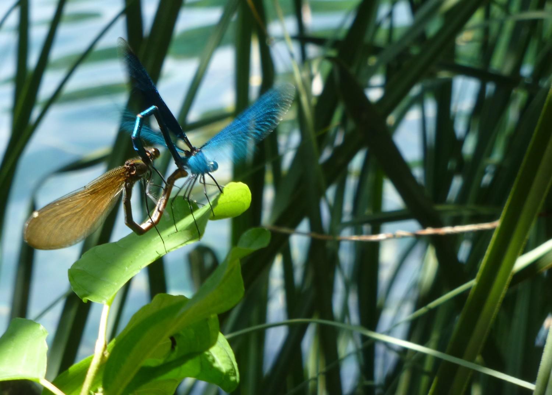 libellules-plitvice