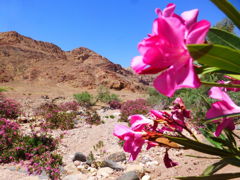lila-rose-jordanie